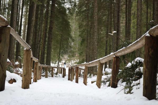 camino nieve pinos zakopane polonia