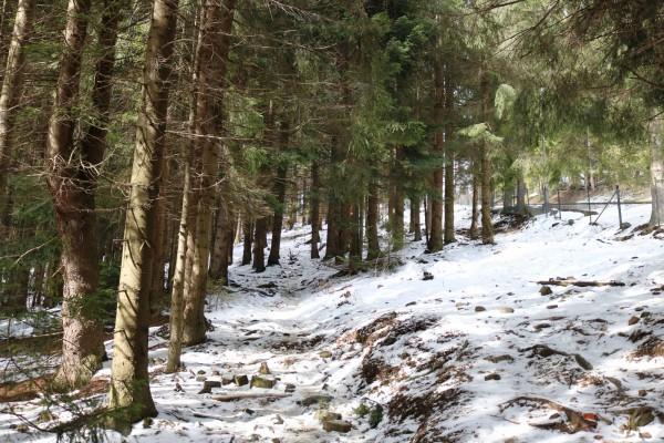 montaña con nieve gubalowka polonia