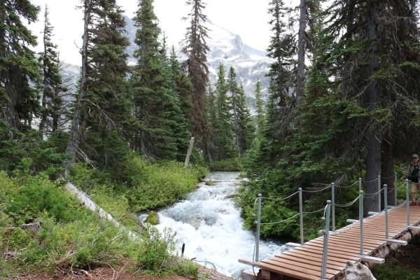 lagos joffre camino en la montana