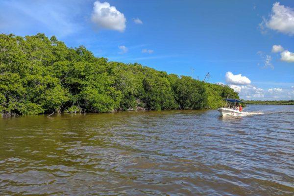 cuanto cuesta un paseo en lancha en rio lagartos en yucatan mexico