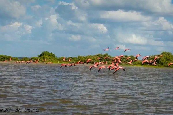 flamingos en rio lagartos en paseo en lancha mexico